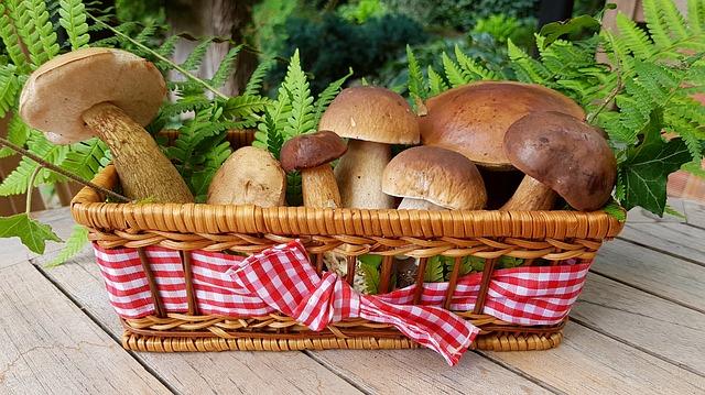 houby v košíčku