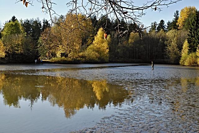vypuštěný rybník.jpg